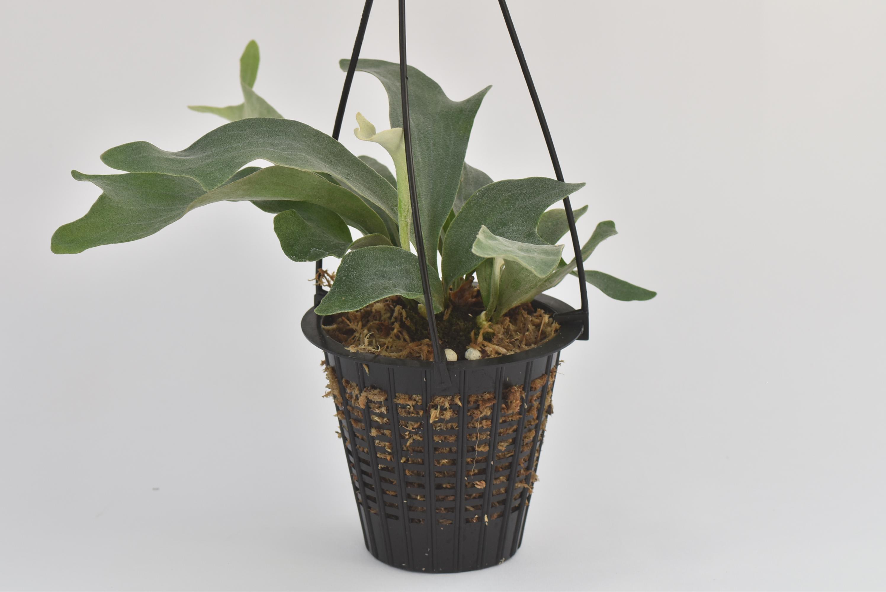 空間を利用し着生植物の本来の姿を。b.c. メッシュポット21個セット